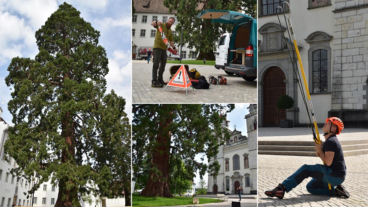 Установка ZIGZAG в режиме SRT для доступа на дерево