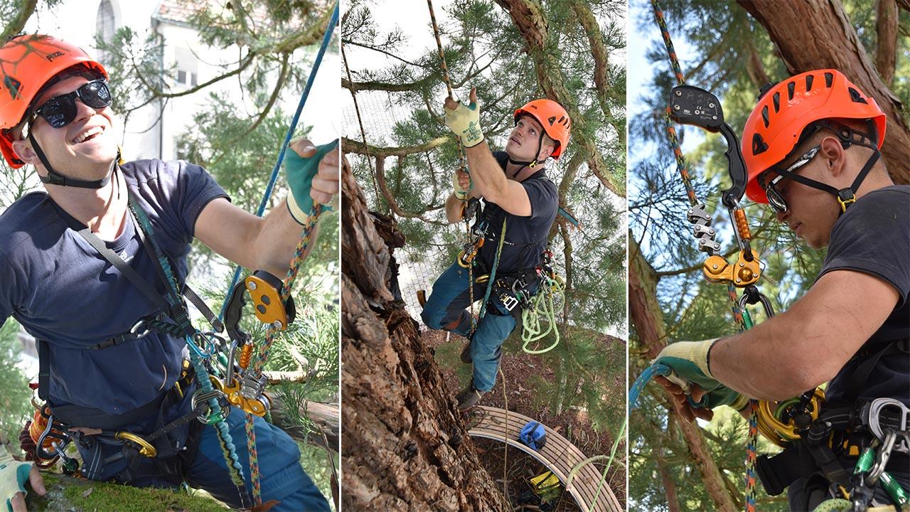 Использование снаряжения Petzl для работы на деревьях