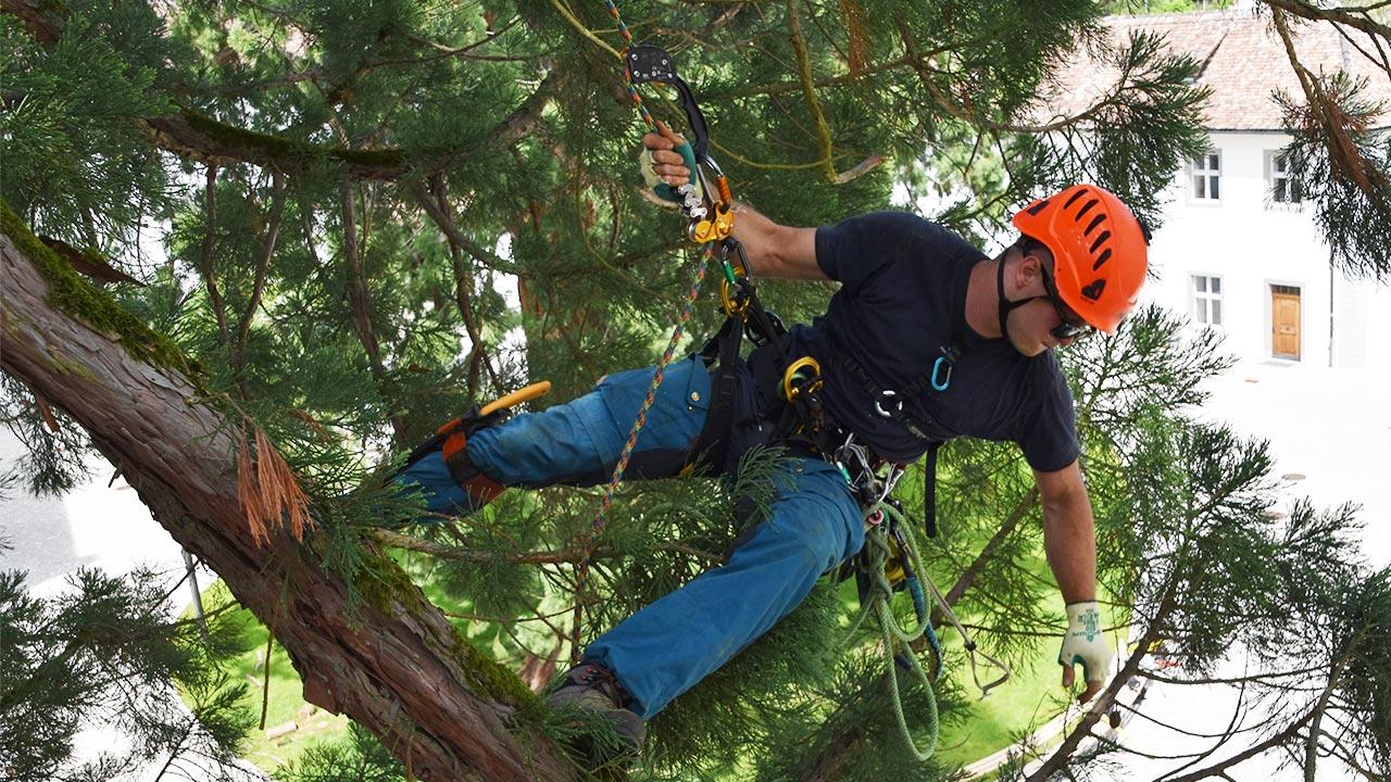 Больше возможностей при работе в кроне дерева благодаря новинкам от Petzl