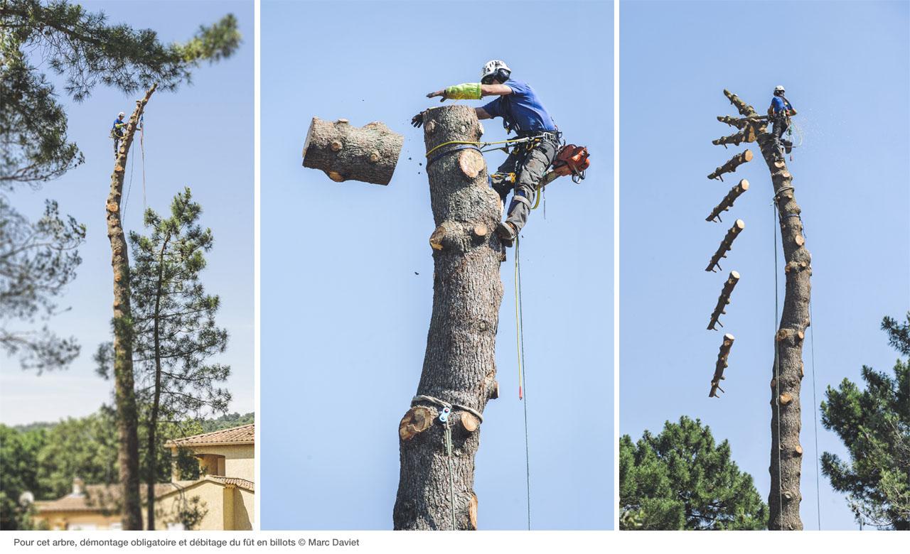 Процесс удаления дерева со снаряжением Petzl