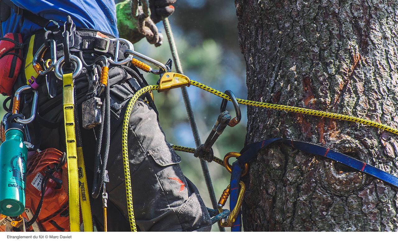 Обеспечение безопасности работника во время демонтажа дерева