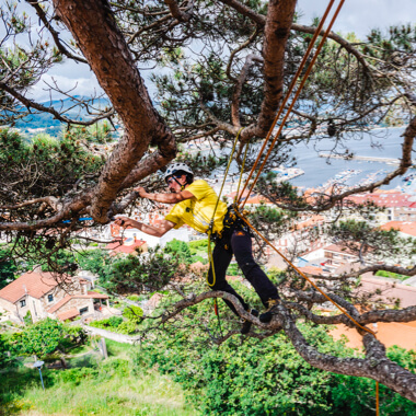 Petzl ZIGZAG mechanical Prusik, Petzl SEQUOIA tree care harness. Trimming a eucalyptus tree in Galicia, Spain